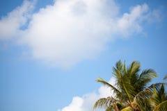 与一个框架的蓝天从棕榈 库存照片