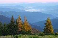 与一个森林的早晨风景山的 免版税图库摄影