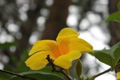 与一个森林的黄色花在背景中 库存图片
