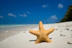 与一个海星的热带海滩在沙子 免版税库存照片