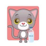 与一个瓶的逗人喜爱的灰色猫牛奶 免版税图库摄影