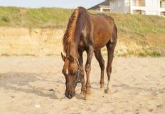 与一个白色斑点的一匹马在他的头 库存照片