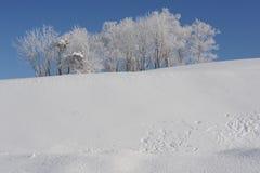 与一个积雪的结构树的空白冬天横向 库存照片