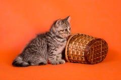 与一个篮子的一只小的蓬松镶边小猫在橙色backgroun 免版税库存照片