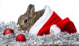 与一个红色圣诞老人盖帽的兔子 免版税库存照片
