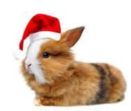 与一个红色圣诞老人盖帽的小兔子 免版税图库摄影