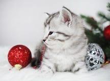 与一个红色球的逗人喜爱的平纹小猫 圣诞节小猫 免版税库存图片