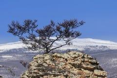 与一个结构树的冬天横向在岩石 免版税库存图片