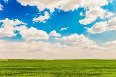 与一个绿色草甸的白天夏天风景在蓝色多云天空下 免版税库存图片