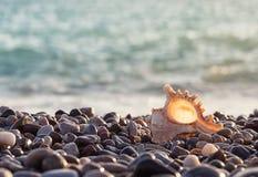 与一个美丽的贝壳的海岩石岸 免版税库存图片