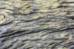 与一个老树桩的被仿造的表面 免版税库存照片