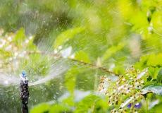 与一个自动供水系统的庭院灌溉 图库摄影