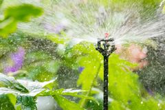 与一个自动供水系统的庭院灌溉 库存照片