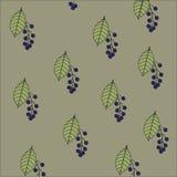 与一个花卉样式的背景纹理 浅绿色的叶子和蓝色果子樱桃在灰色背景,秋天 库存照片