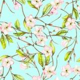 与一个苹果树分支的装饰品的一个无缝的花卉样式与嫩桃红色开花的花和绿色叶子的,被绘 免版税图库摄影