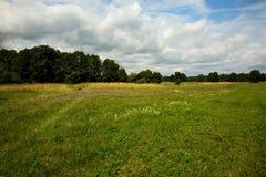 与一个草甸和花的美好的风景在夏天 库存图片