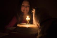 与一个蜡烛的生日蛋糕猫的 库存照片