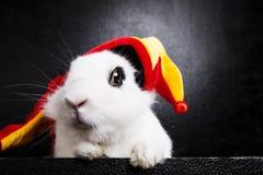 与一个说笑话者盖帽的兔子在黑背景 库存图片