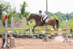 与一个车手的一匹马在一个跃迁时的施行在障碍的 库存图片