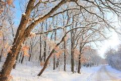 Paceful树在冬天背景中 免版税图库摄影