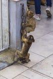 与一个金属链子的两小直布罗陀巴贝里短尾猿猴子戏剧岩石在直布罗陀的岩石的上面 免版税库存图片