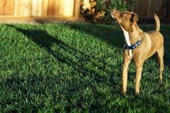 与一个长的阴影的小狗 免版税库存图片