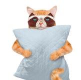 与一个面具的猫睡觉的与枕头 库存照片