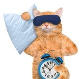 与一个面具的猫睡觉的与枕头 免版税库存照片