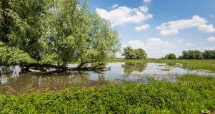 与一个水平的树干的树在水中反射了 库存照片