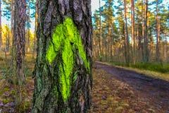 与一个绿色箭头的树在木头 免版税库存图片