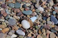 与一个结辨的样式的金子婚戒在小卵石中的一块白色石头附近 免版税库存照片