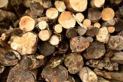 与一些新近地裁减木头的日志堆 免版税库存照片