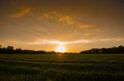 与一些朵云彩的金黄天空 库存图片