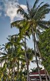 与一些棕榈酸值苏梅岛,泰国的空的沙子海滩 免版税图库摄影