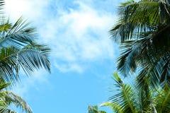 与一些棵云彩和棕榈树的蓝天 库存图片