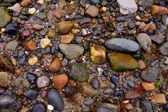 与一些海草的湿石头在海滩 免版税库存照片