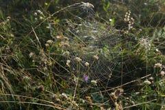 与一些露水的一个蜘蛛网与太阳清早发出光线 库存照片