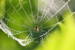与一些水滴的蜘蛛网 免版税图库摄影