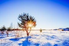 与一位战士的冬天风景在日落和杉木前 免版税库存图片
