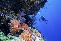 与一位水下的摄影师的红海礁石 库存图片