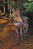 与一匹马的一个风景在森林 库存照片