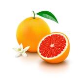 与一半的在白色背景的葡萄柚和花 免版税库存照片