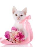 与一卷桃红色磁带和牡丹的花的白色小猫。 免版税图库摄影