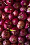 与一发芽的一个的干葱 免版税图库摄影