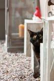 与一只俏丽的猫的捉迷藏 库存照片