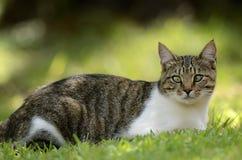 与一只半眯着眼睛看的眼睛的离群猫 免版税库存图片