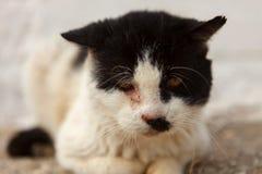 与一只受伤的眼睛的街道猫 库存图片