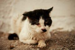 与一只受伤的眼睛的街道猫 免版税库存图片