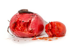 与一只大蠕虫的两个腐烂的蕃茄 库存照片