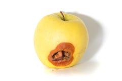 与一只大蠕虫的腐烂的苹果 免版税库存图片